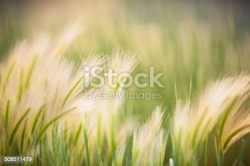 Flowing green and yellow grasses blowing in the wind. Lots of copy space.