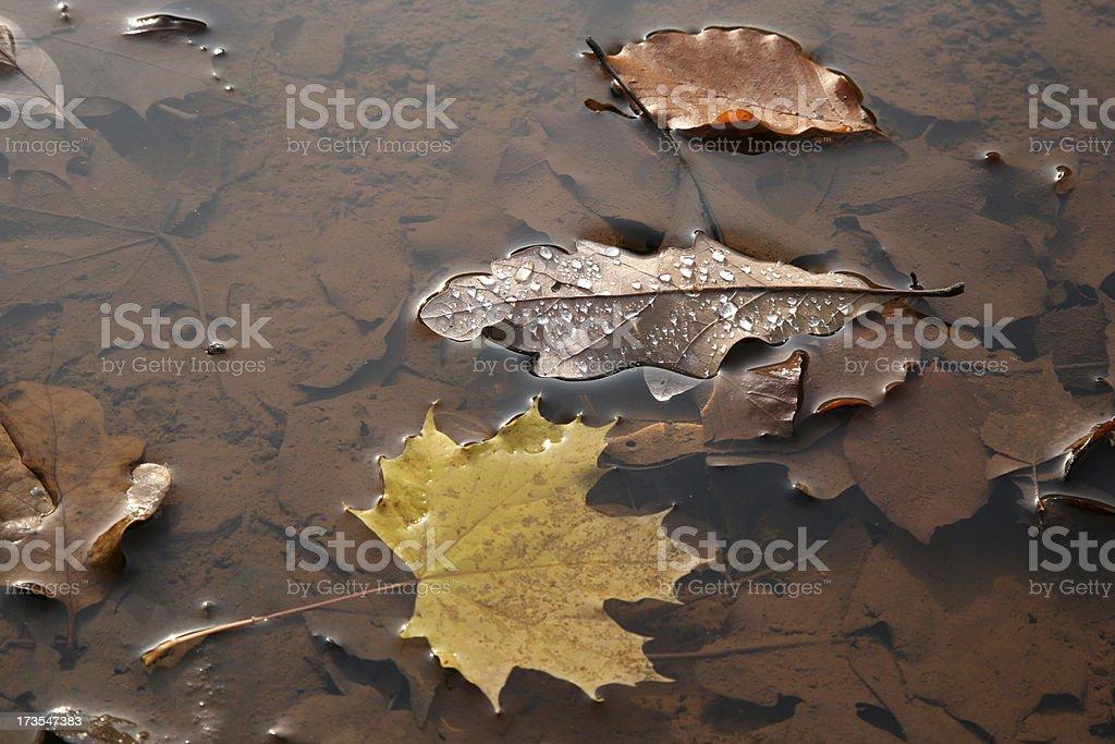 Blätteransammlung royalty-free stock photo