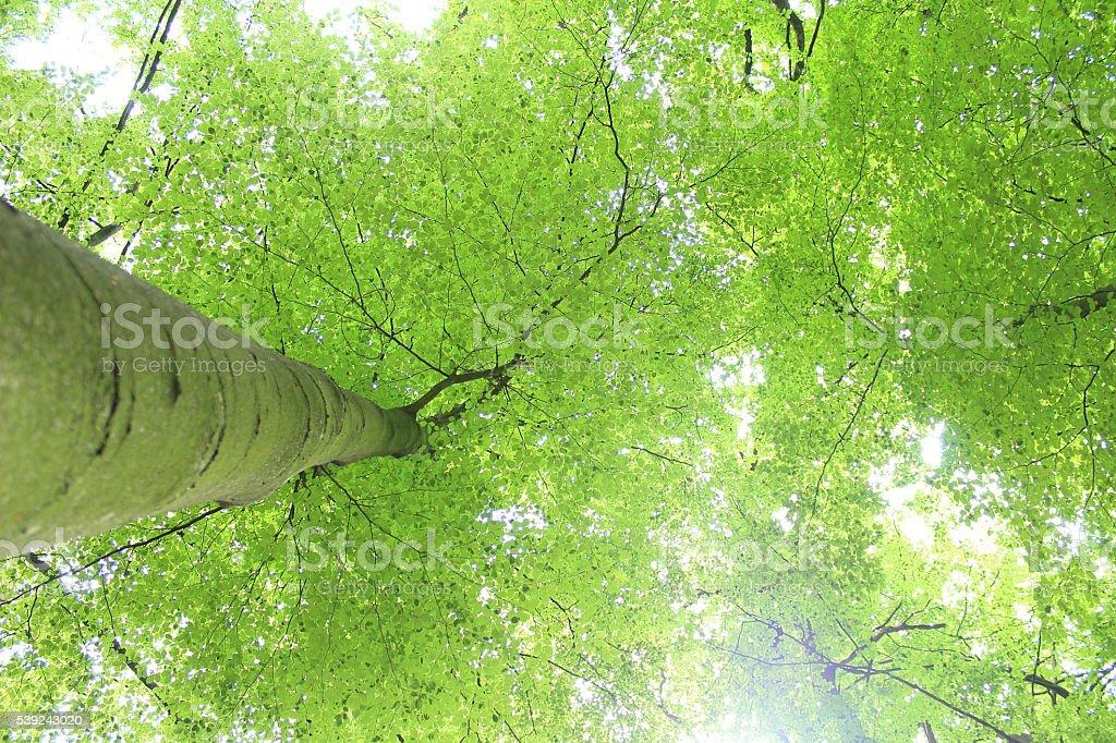 Blätterdach foto de stock libre de derechos