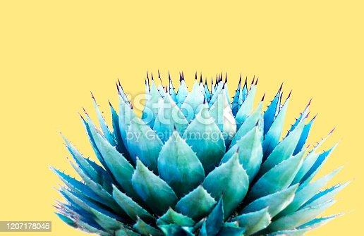 A spiky blue agave (American aloe) plant against a pastel yellow background. Copy space available above the plant. Concepts: teamwork, unity, working together, togetherness, sharp, sharp team.