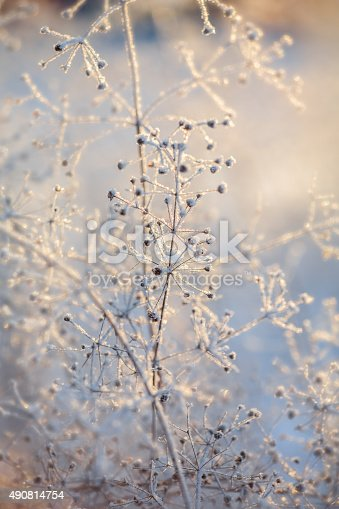 macro of dried frozen plants at sunset