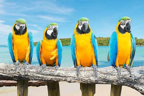 Ara bleu et or sur Tropical magnifique plage et la mer - Photo