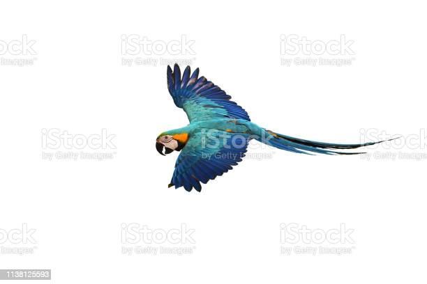 Blue and gold macaw picture id1138125593?b=1&k=6&m=1138125593&s=612x612&h=d0tdqghghugxf3xjrpplfeuud0xirqdhgriaoern588=