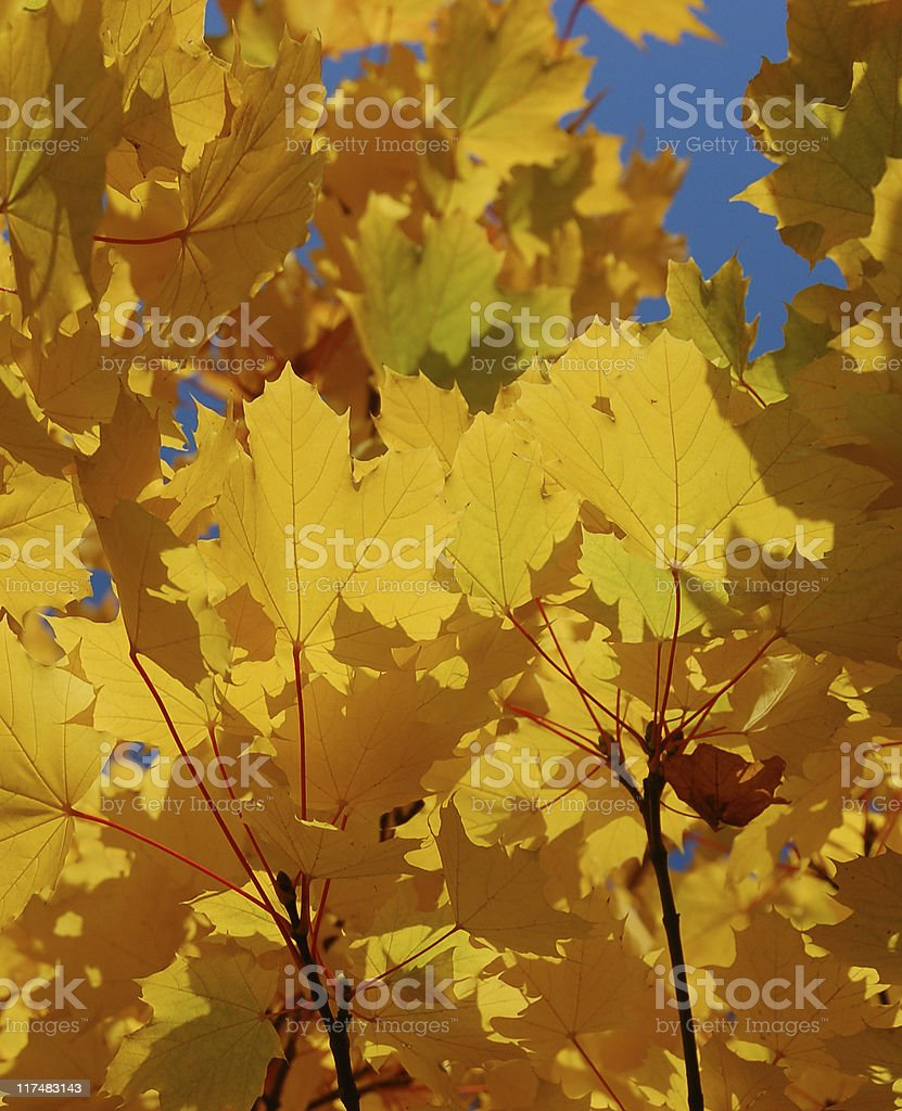 Blue and Gold stock photo