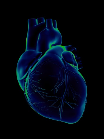 Human heart, with aorta, pulmonary trunk, veins, left ventricle, right ventricle, left atrium, right atrium, superior vena cava, inferior vena cava and artery, on black background. Great to be used in medicine works and health.