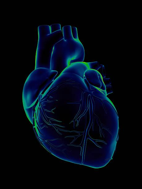 blue and green human heart on black background - human heart stock photos and pictures
