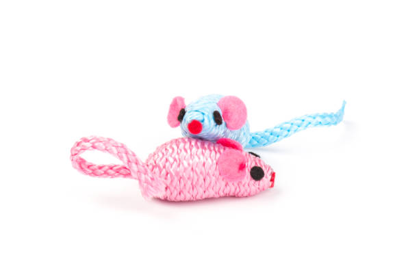 Blue and pink toy mouse for pet isolated on white background picture id1214492541?b=1&k=6&m=1214492541&s=612x612&w=0&h=2ne2brz oiwzdsgrpm926b5x4wl2omskenyar7qalda=