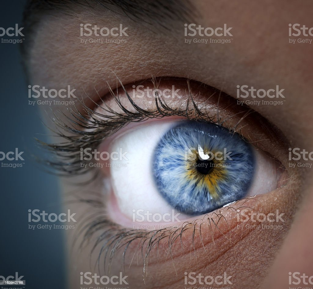blue and yellow eye stock photo
