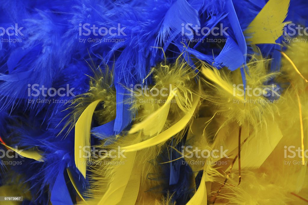 blue and yellow feathers royalty-free stock photo