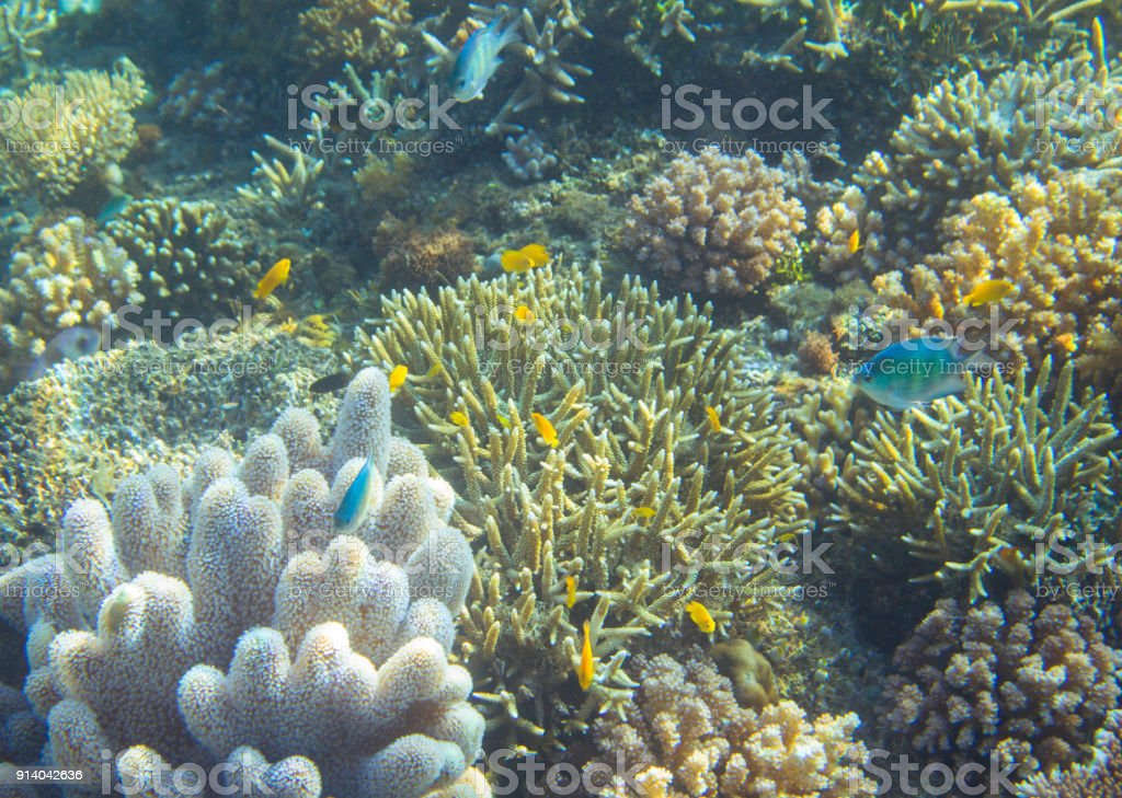 Blue and yellow fish coral reef. Tropical seashore animals underwater...