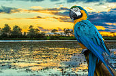 istock Blue and Yellow Macaw on the nature 496650204