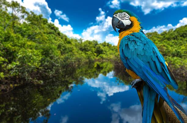 Arara-azul e amarelo da natureza - foto de acervo