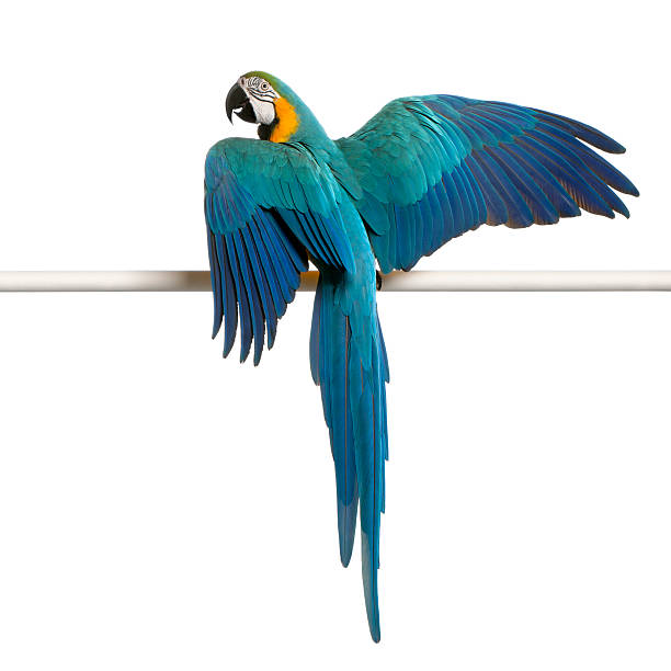 Blue and yellow Macaw perched on a pole stock photo