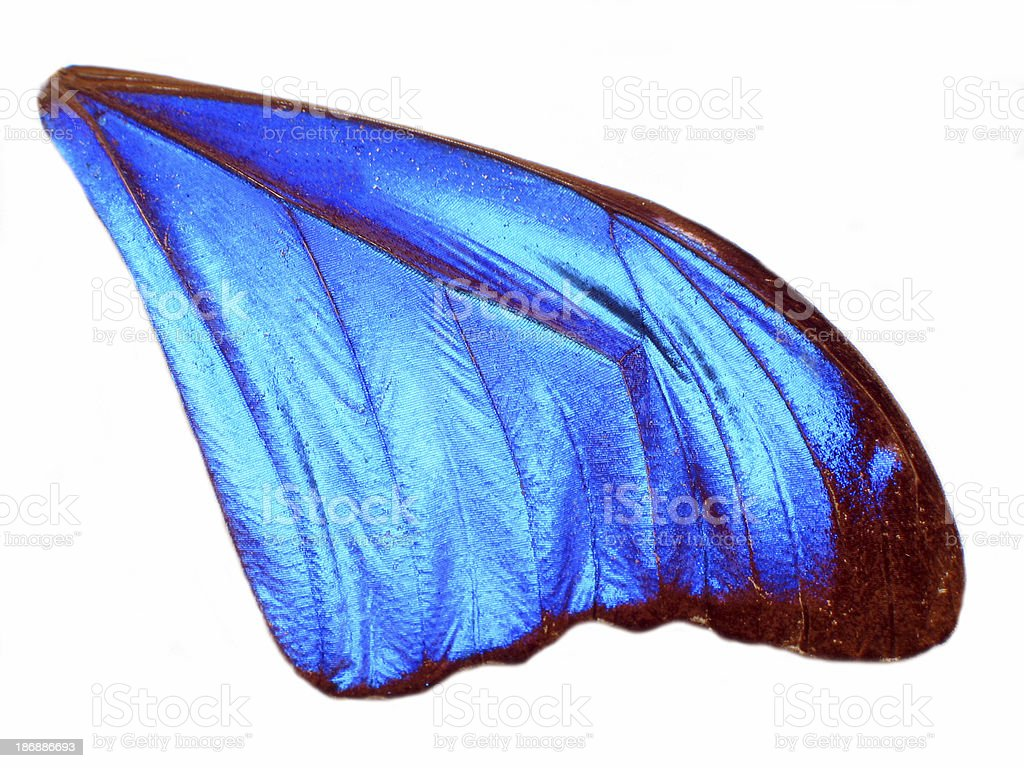 Blue Angel Wing royalty-free stock photo