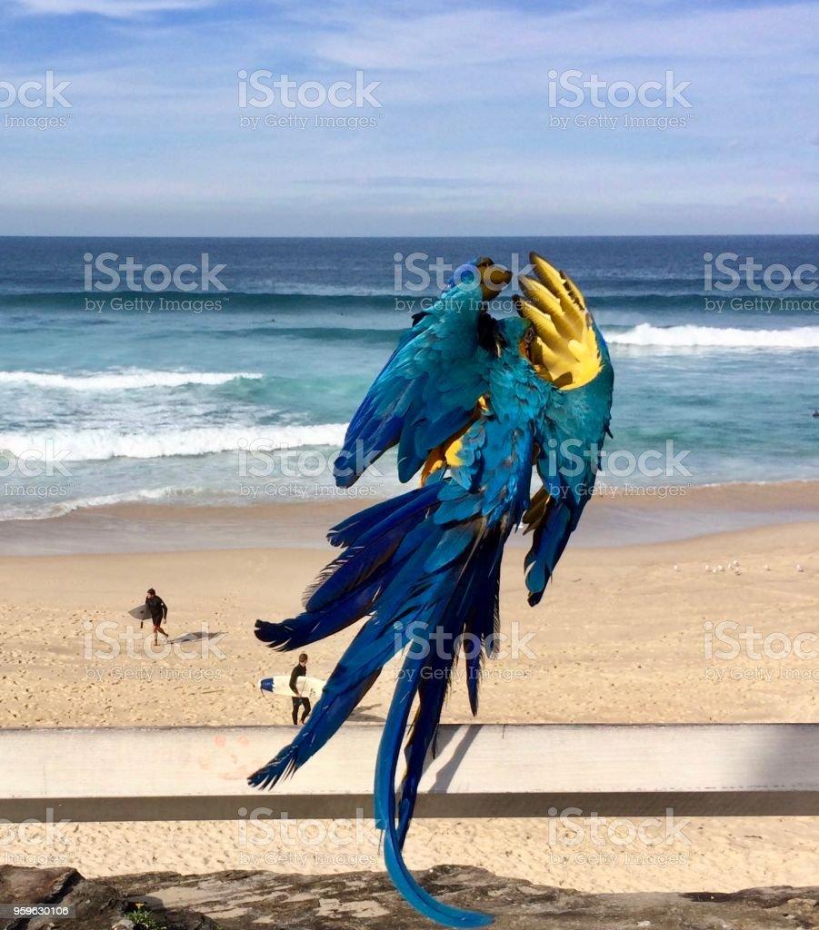 Azul ara - Foto de stock de Agua libre de derechos