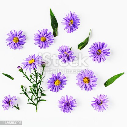 Blue aster flowers with leaves composition set. Autumn flower arrangement on white background. Top view, flat lay. Floral design element