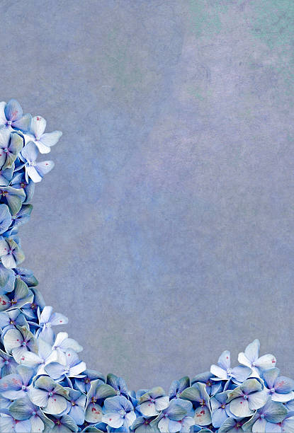 A blue background framed with blue Hydrangea flowers stock photo