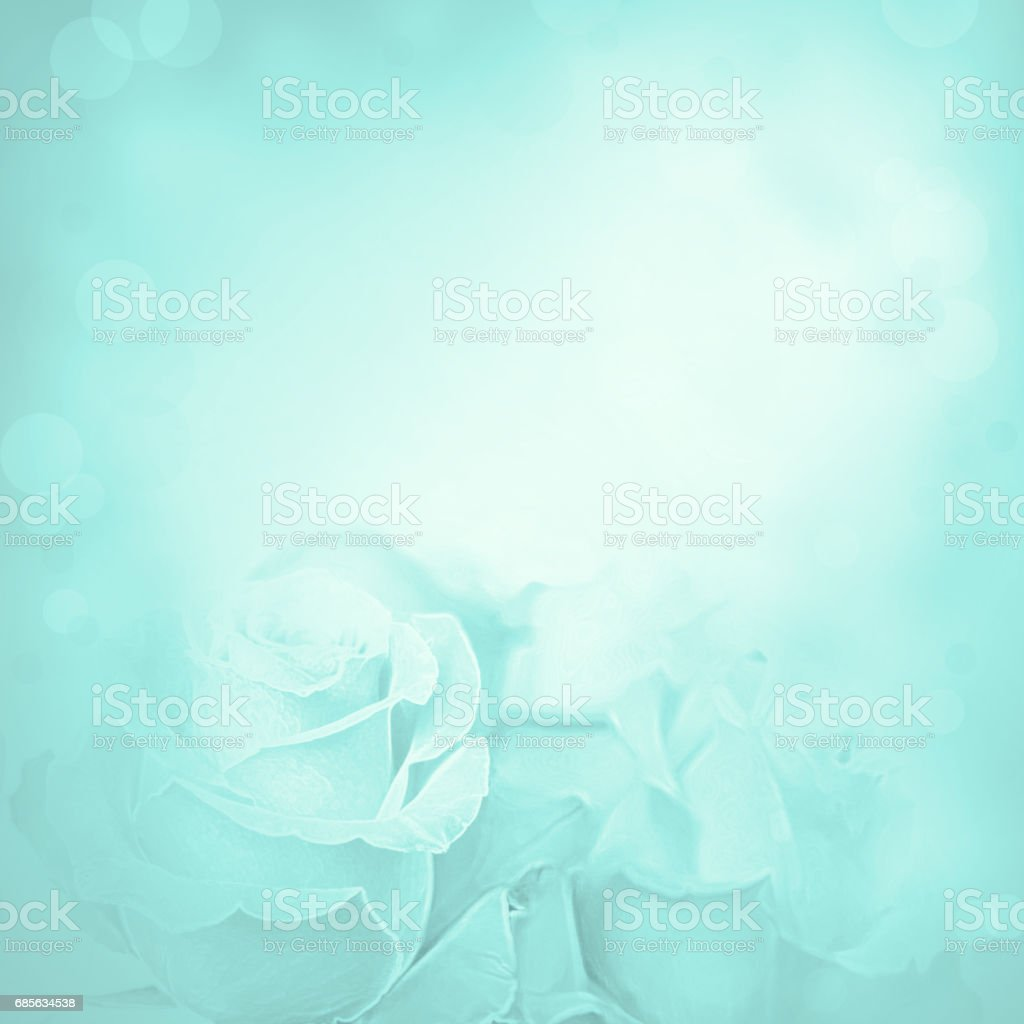 Blue background with rose flowers. foto de stock royalty-free