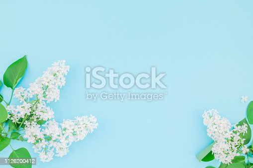 Creative flat lay concept top view of white lilac flowers petals on pastel blue background with copy space in minimal style, template for lettering, text or design