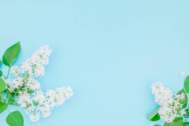 Blue background with white lilac flowers picture id1126200412?b=1&k=6&m=1126200412&s=612x612&w=0&h=iofawegk3fmxihw a5phwtemvejmbnoic ofz8kxv6q=