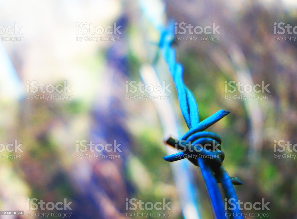 Blue barbed wire stock photo