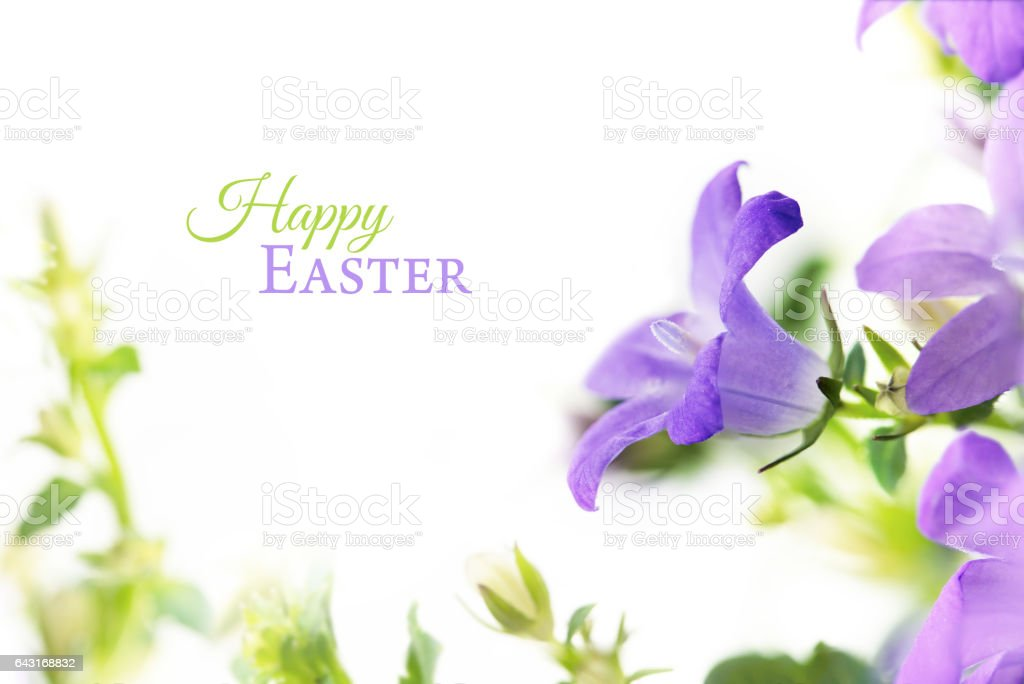 blue bell flowers (campanula), frame, isolated, text Happy Easter stock photo
