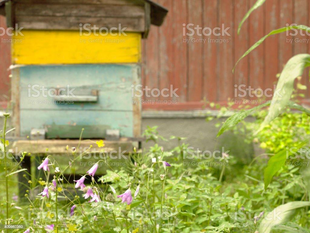 Blue Bells Behind Beehive stock photo