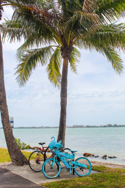 Blue bike under a palm tree at Bird Key Car Park - Sarasota, Florida stock photo