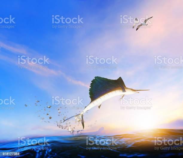 Blue black marlin fish jumping to mid air over blue sea and sea gull picture id918127384?b=1&k=6&m=918127384&s=612x612&h=8l9jvo1qvgh9pkvt6sl7fqdualu1mwwsnvilfcaejkk=