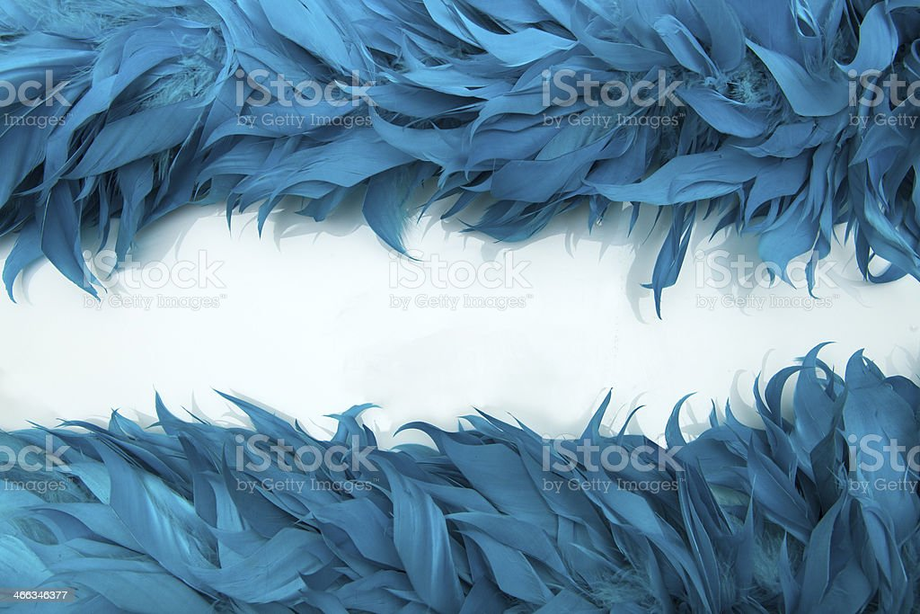 Blue boa feathers of birds stock photo