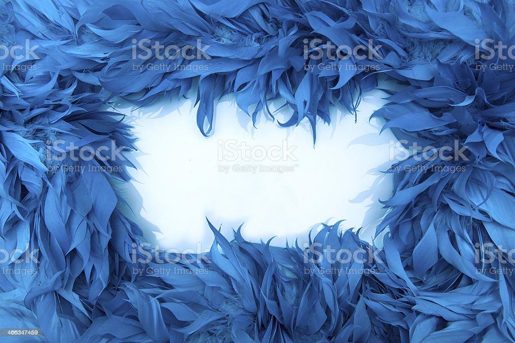 Blue boa feathers of birds stock photo