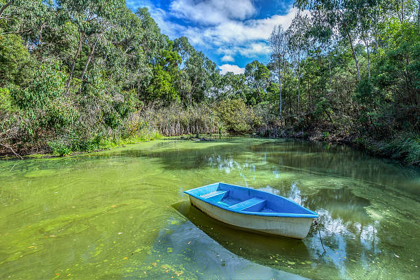 Blue Boat on Green Pond stock photo
