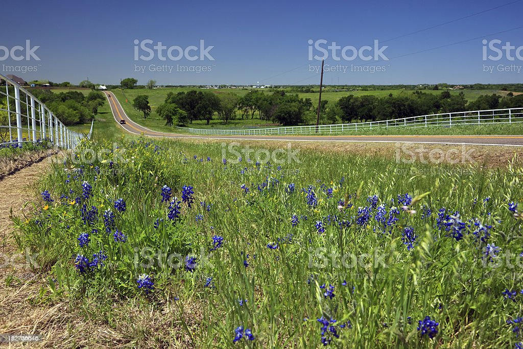 Blue Bonnete Field and road royalty-free stock photo