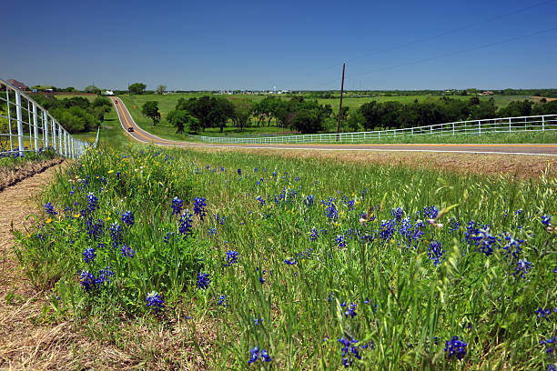 Blue Bonnete Field and road stock photo