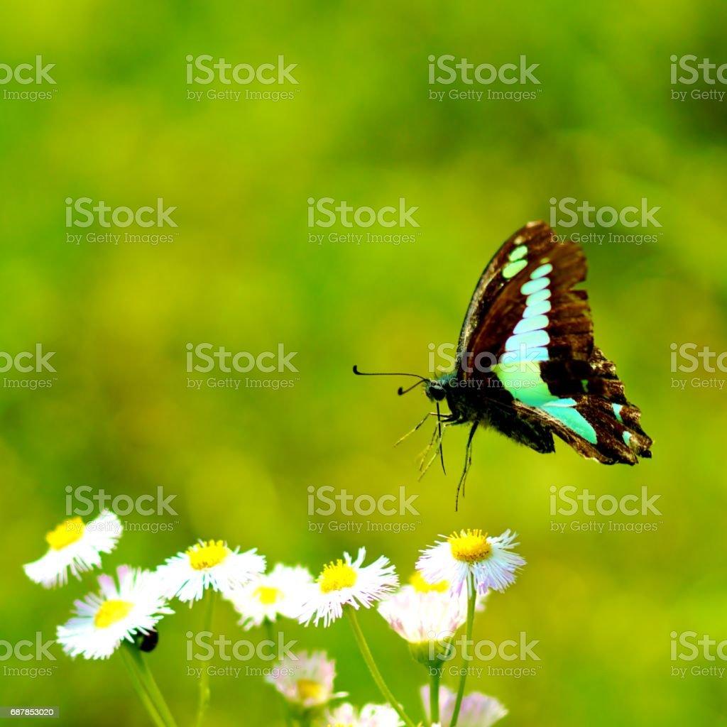 Blue bottle butterfly stock photo
