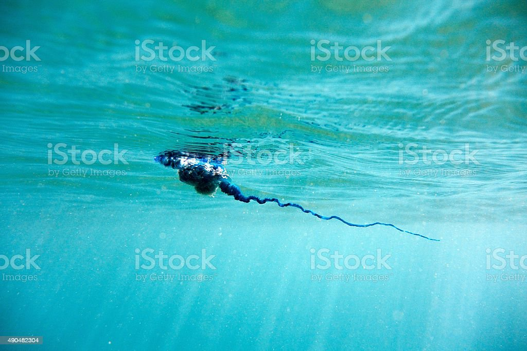 Blue bottle jelly fish tentacle stock photo
