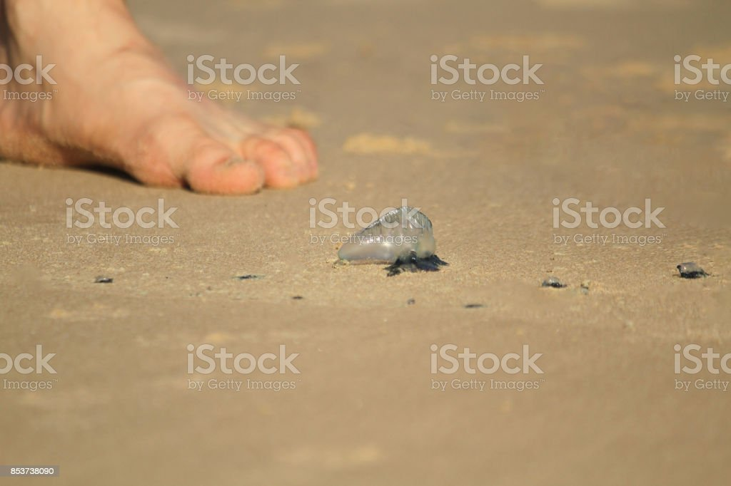 Blue bottle on the beach with a shoeless foot in the background stock photo