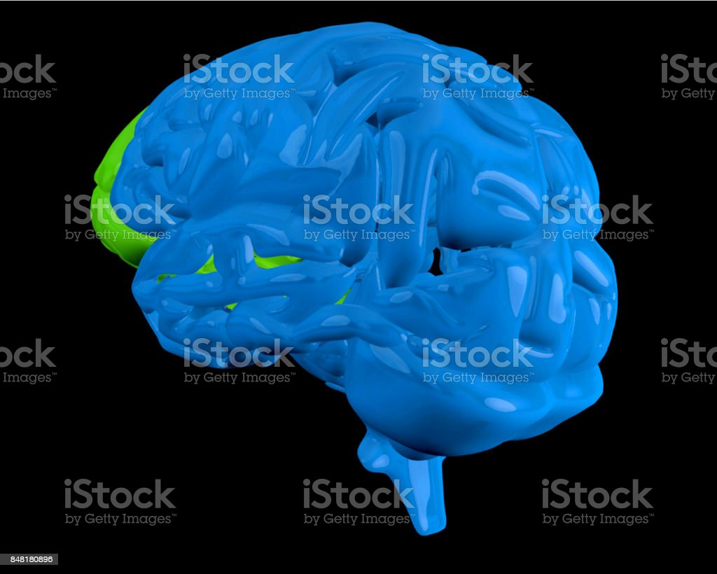Blue brain with highlighted frontal lobe stock photo