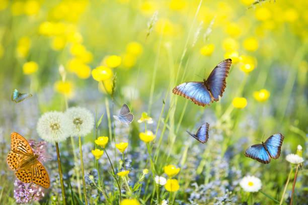 Blue butterflies in the foreground flying in a sunny meadow picture id941890580?b=1&k=6&m=941890580&s=612x612&w=0&h=c6pdwh9j5hhjrno69g hyt8f9cve14te vwidsxwvnw=