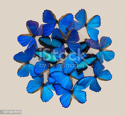 999676880 istock photo Blue butterflies isolated on white 1021347870