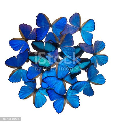 999676880 istock photo Blue butterflies isolated on white 1076115562