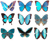 many blue butterflies on a white background