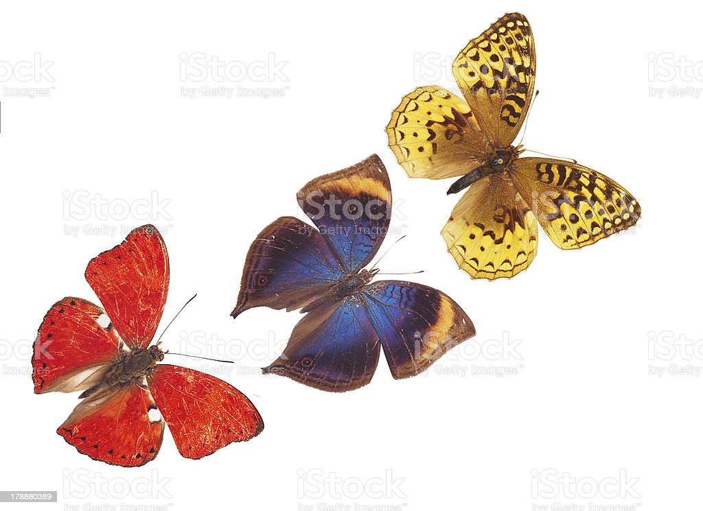 blue butterfly collection isolated on white royalty-free stock photo