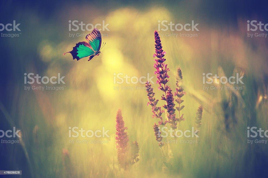 Blauer Schmetterling fliegt spring meadow – Foto