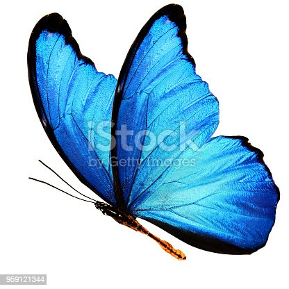 999676880 istock photo blue butterfly isolated on a white background 959121344