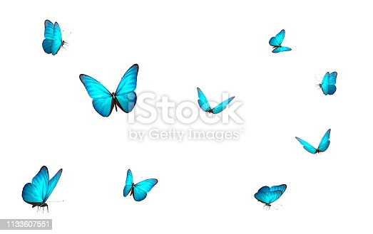 blue butterfly isolated on white back ground , 3d illustration