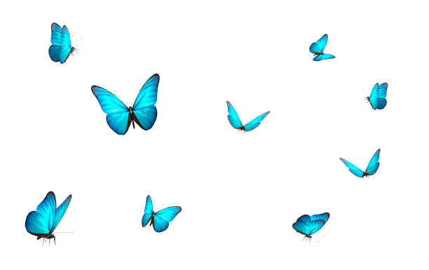 blue butterfly isolated on white back ground - arto di animale arto foto e immagini stock