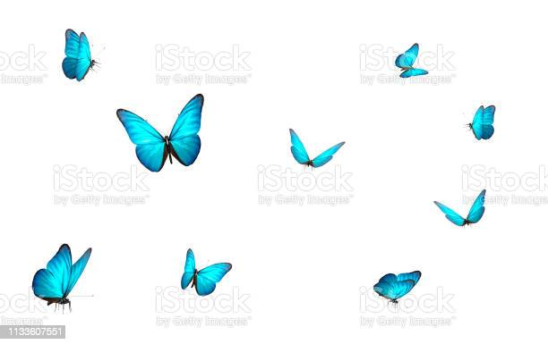 Photo of blue butterfly isolated on white back ground