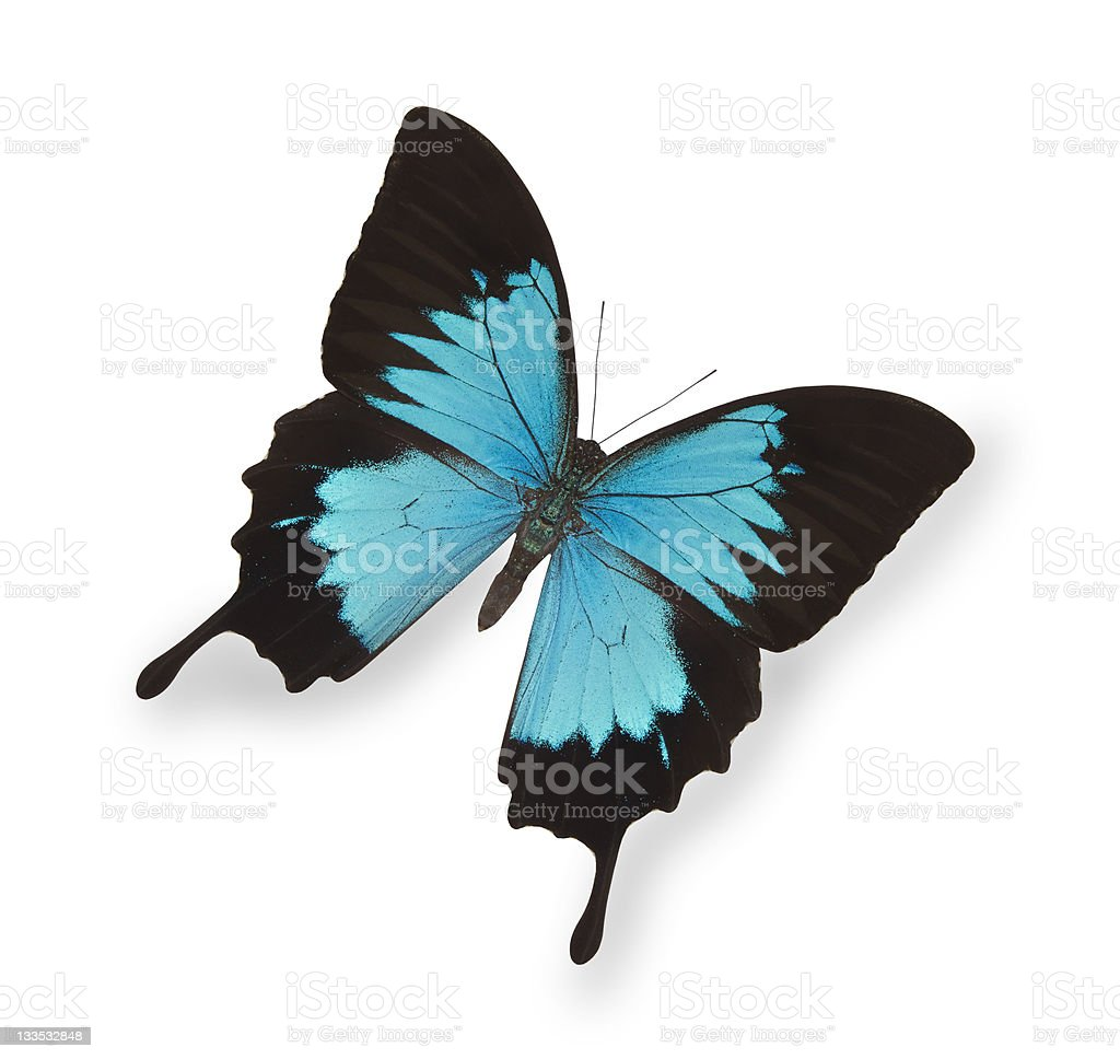 Blue butterfly isolated on white royalty-free stock photo
