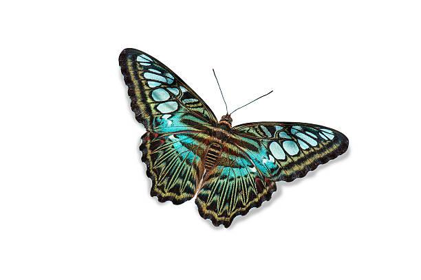 Blue butterfly isolated picture id615620754?b=1&k=6&m=615620754&s=612x612&w=0&h=dfdxvu5e3mujdy x1gsajgkdm0yxkumkcndftvyrj4i=